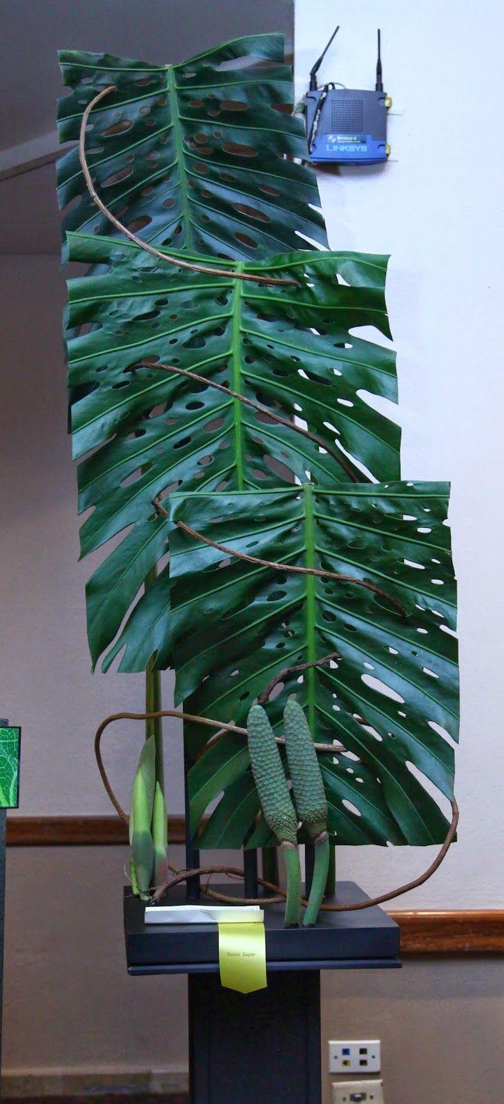 Primer Lugar, ganador de Cinta Azul   Diseño de Laura de Benedetti   Club Costa de Oro de Colón, Panamá   Así Somos   Convención de C...