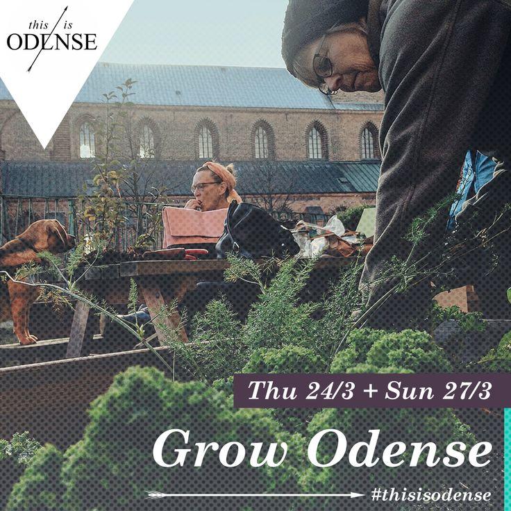 Urban gardening NU. Åbent hus i byhaverne. Læs anbefalingen på: http://www.thisisodense.dk/da/22648/urban-gardening-nu