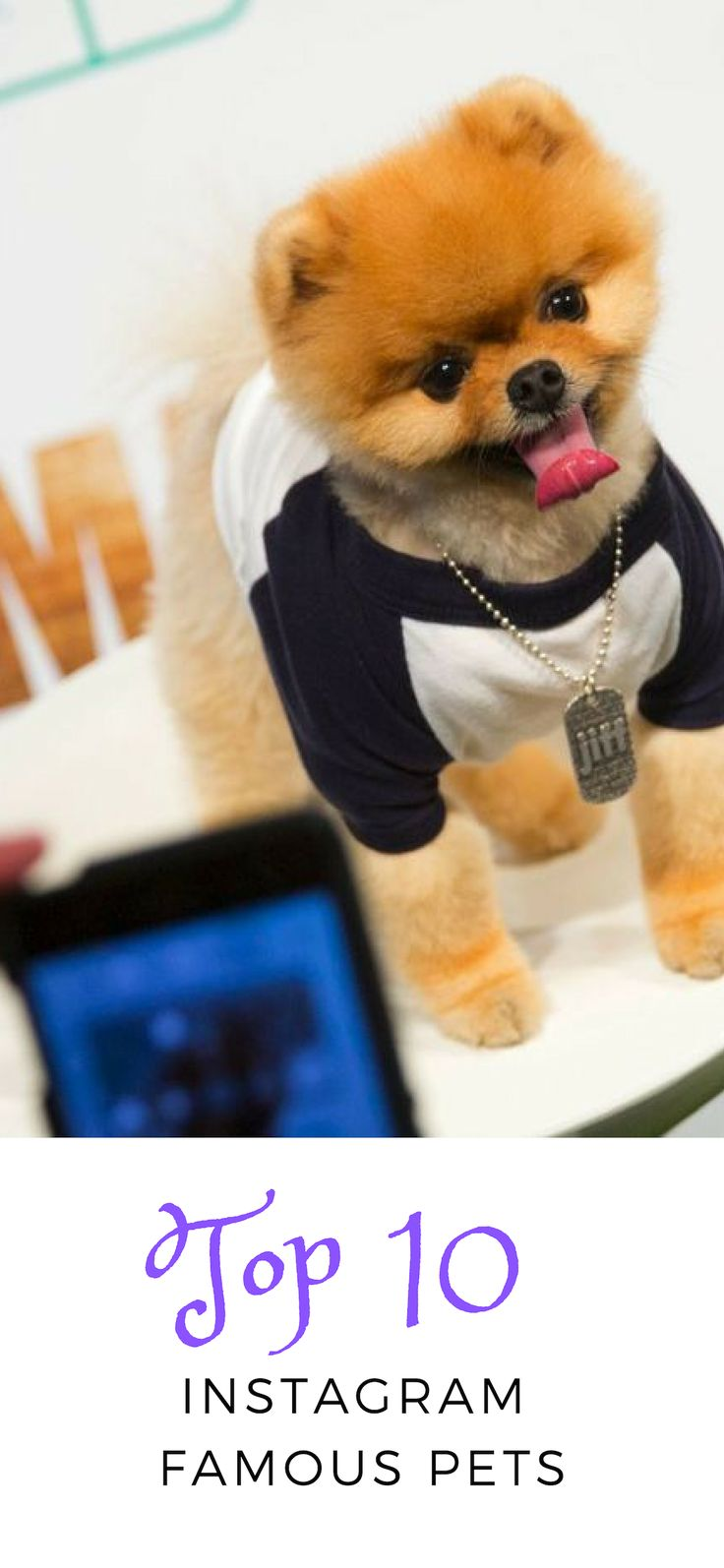 Prime 10 Instagram Well-known Pets
