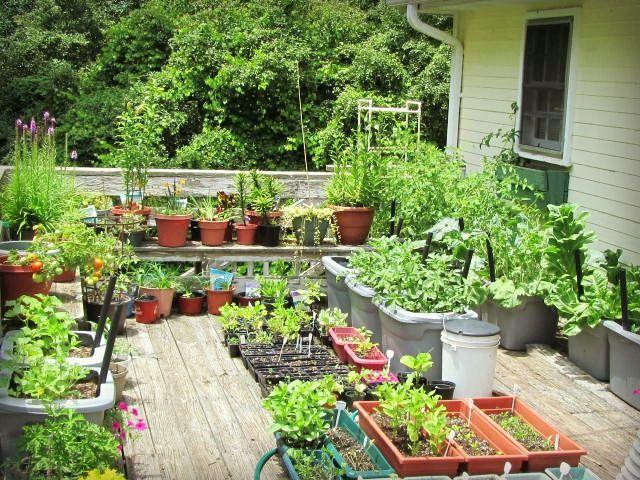 Balkon Bahçeciliği (Hobi Bahçeleri)