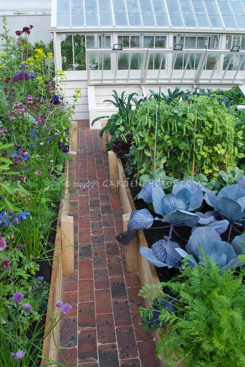 ColdFrame in Raised Bed Vegetable Garden with path, greenhouse, brick, raised beds, cabbages, peas, flowers, mixed, together, food plants, backyard,