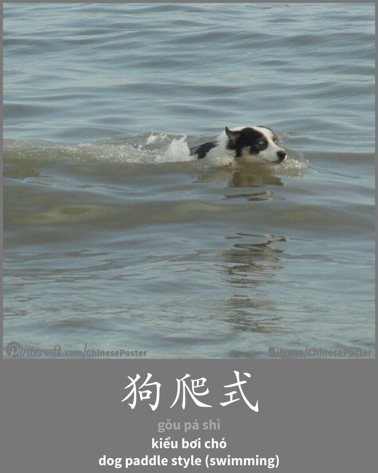 狗爬式 - gǒu pá shì - dog paddle style (swimming)