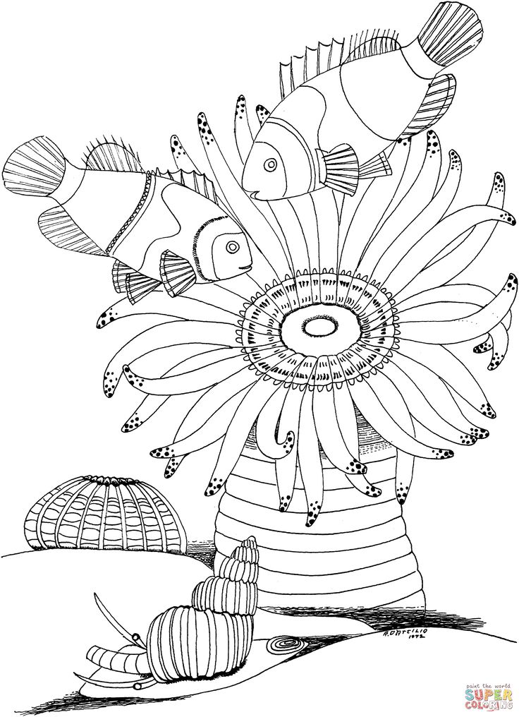95 best Color Fish and Such images on Pinterest Coloring pages - best of catfish coloring page