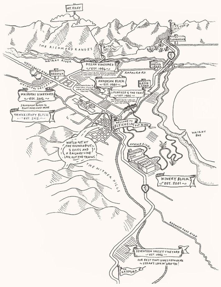 Vineyard — Mount Riley Wines Blenheim, Marlborough