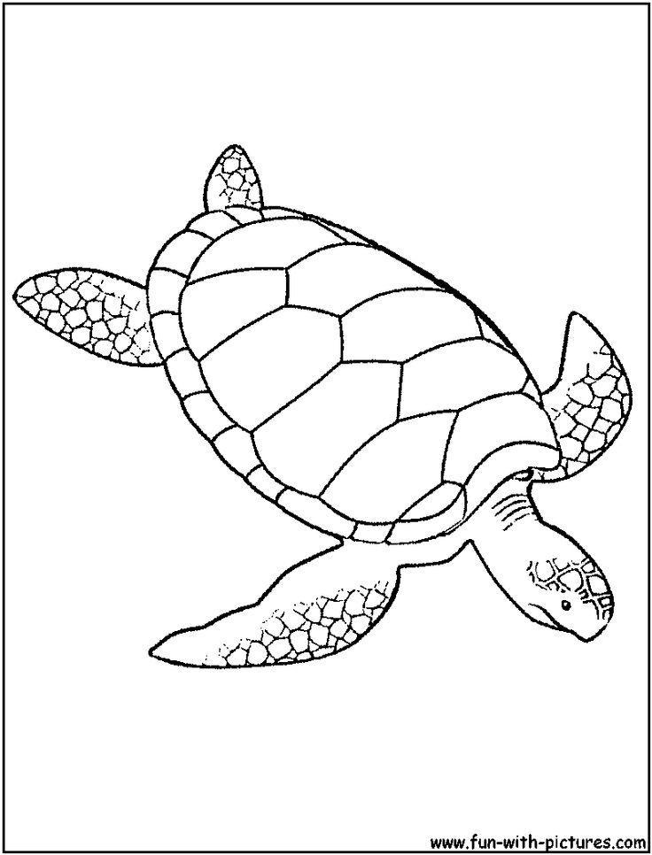 Top 25 Best Turtle Coloring Pages Ideas On Pinterest Kids - under the sea coloring pages pinterest