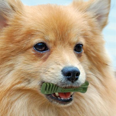 Greenies Dog Dental Chew Treats   PetSolutions   Black Friday Through Cyber Monday 2014 Dog Specials