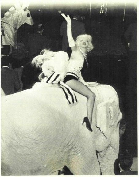 Marilyn At A Madison Square Garden Charity Circus Gala March 1955 Marilyn Monroe Charity