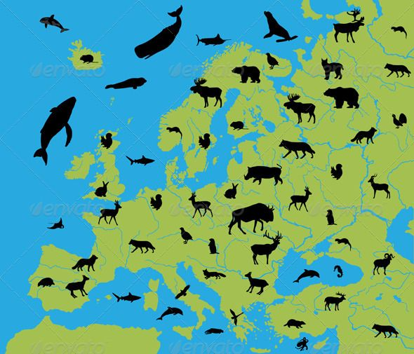 Animals Of Europe Animals ECommerce And Design