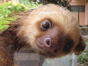 Banho das preguiças
