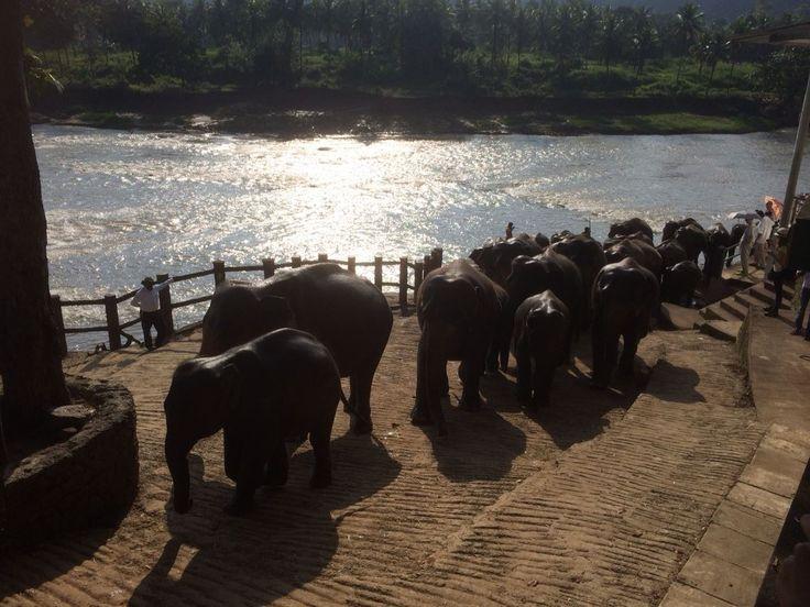 Elephants Heading Home after their bath
