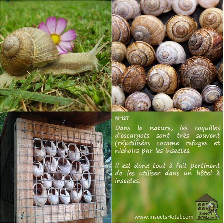 N 127 les coquilles d 39 escargots dans les h tels insectes quadriptyques pinterest h tel - Coquille d oeuf dans le jardin ...