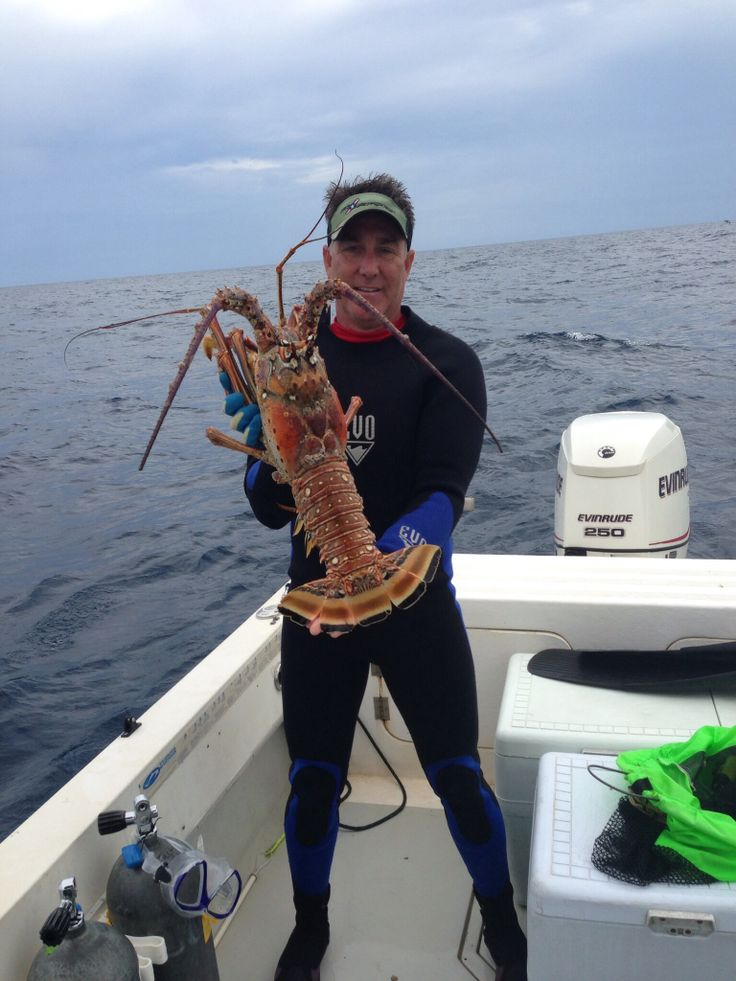 Rock Lobster, Florida Lobster, Or Spiny Lobster Either Way