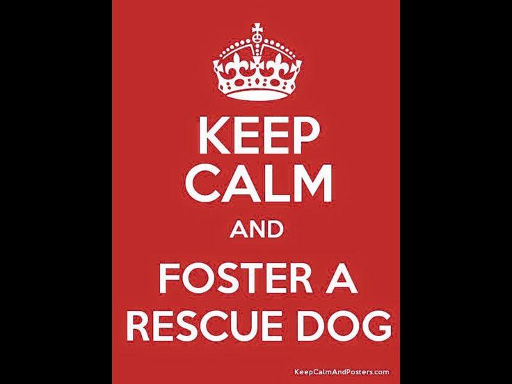Rescue, foster, adopt