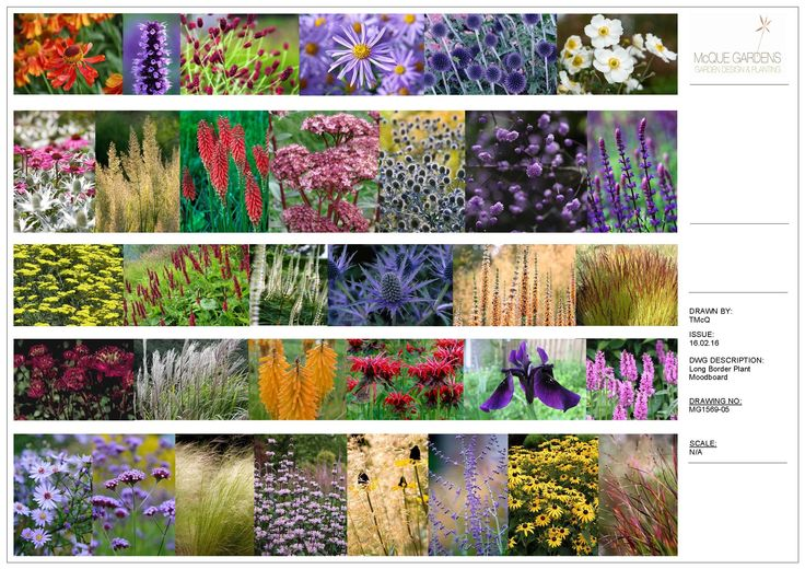 17 best images about planting combinations on pinterest for Garden design east lothian