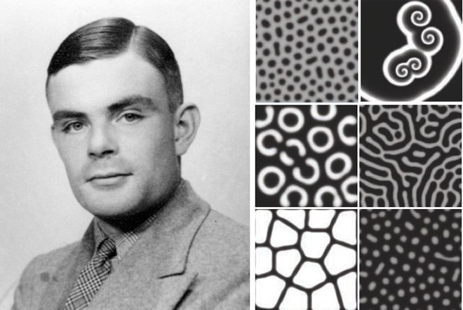 "Near the end of his life, the great mathematician Alan Turing wrote his first and last paper on biology and chemistry, about how a certain type of chemical reaction ought to produce many patterns seen in nature.  Called ""The Chemical Basis of Morphogenesis,"" it was an entirely theoretical work. But in following decades, long after Turing tragically took his own life in 1954, scientists found his speculations to be reality.  *a brilliant, tragic man"