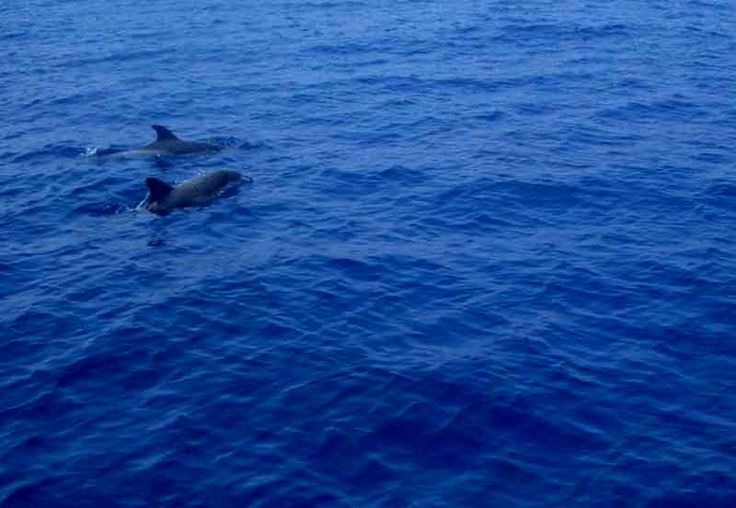For the animallovers dolphins in Aegean Sea!