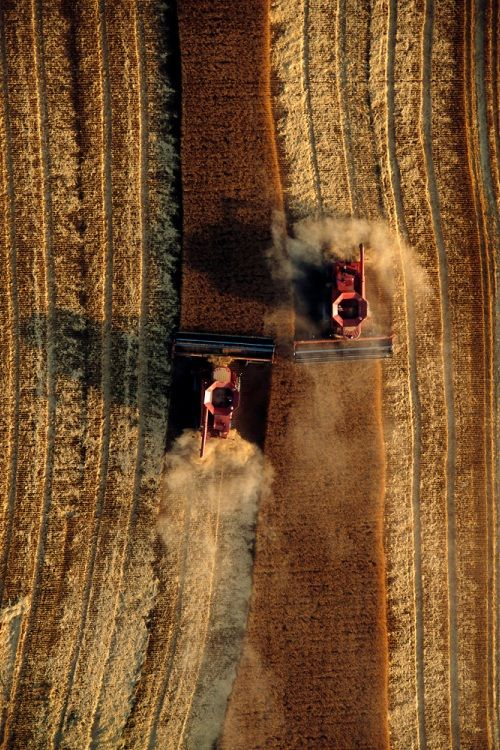 """♂ Chocolate brown """"Wheat harvest, great plains"""" by Jim Richardson."""