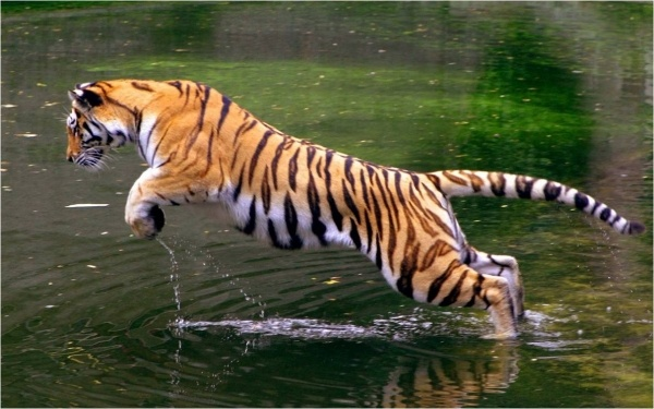 wildlife India trip : online information on wildlife destination in india