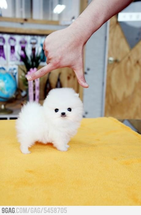 I wouldn't mind having this little cotton ball