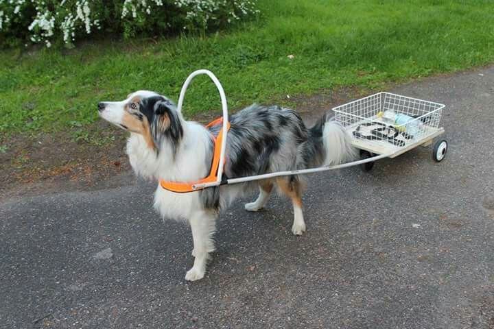 Cart for dog