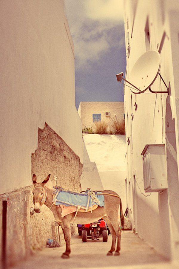 A donkey is always needed for a traditional Greek wedding in Greece! Love it