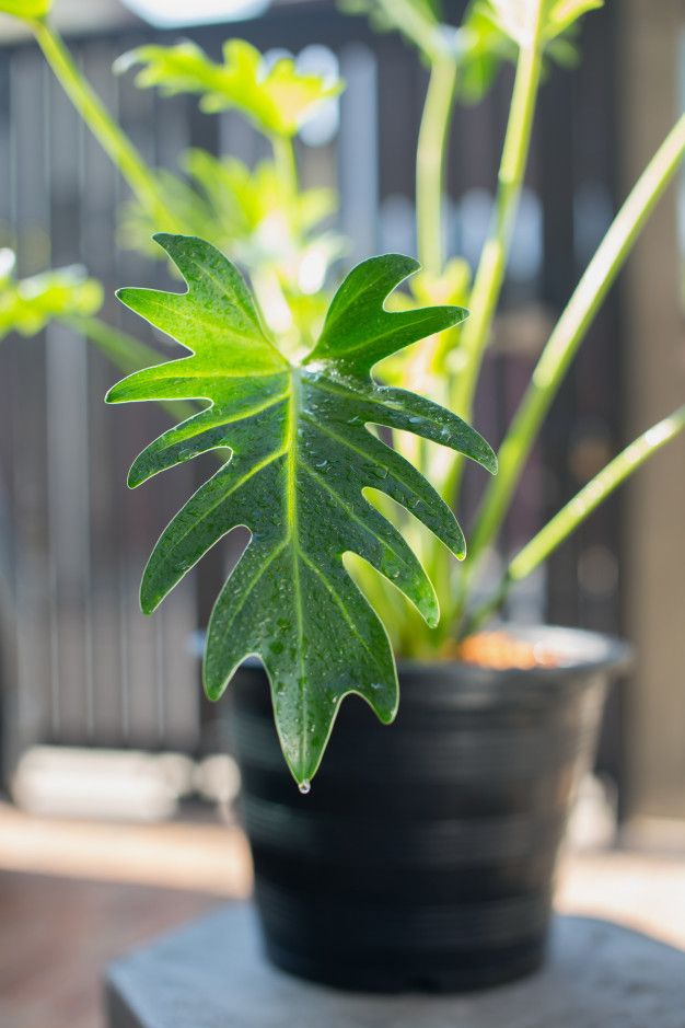 15 Roslin Doniczkowych Ktore Naprawde Maja Realny Wplyw Na Nasze Zdrowie Genialne Plant Leaves Plants Garden