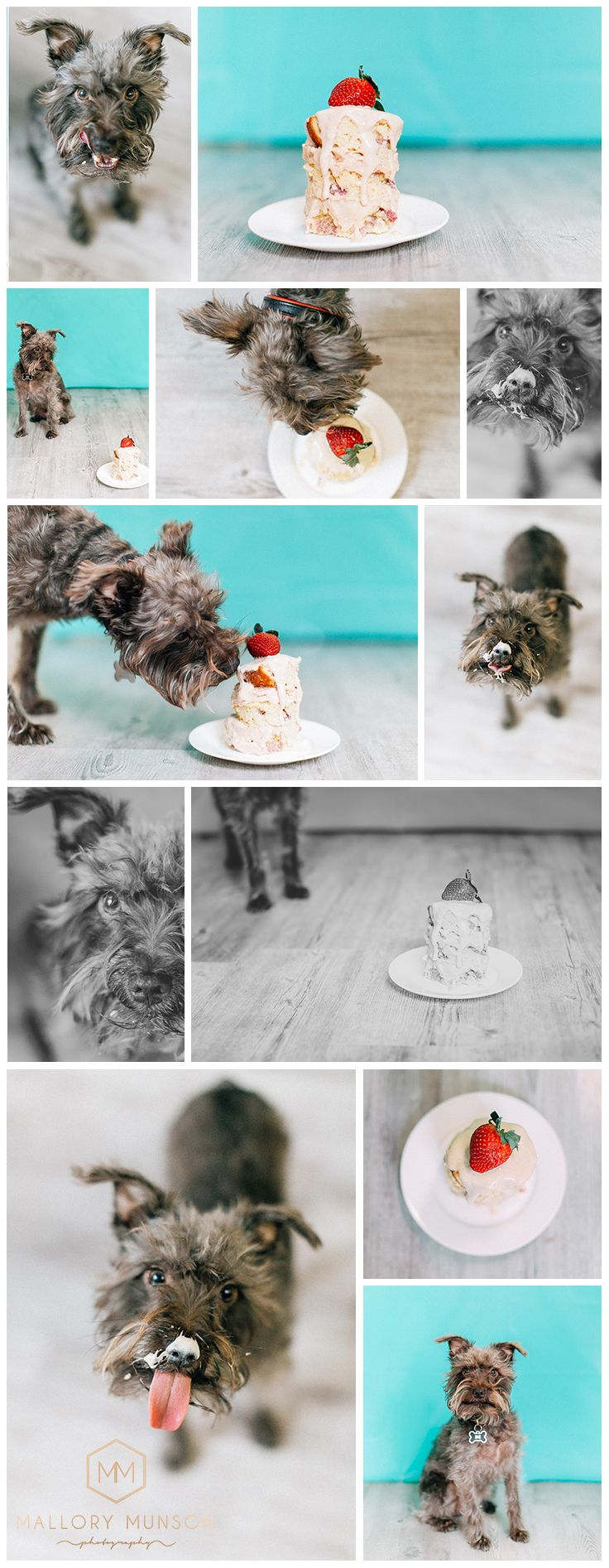 Our Miniature Schnauzer Jasper's third birthday! A homemade dog friendly cake and a photo shoot.