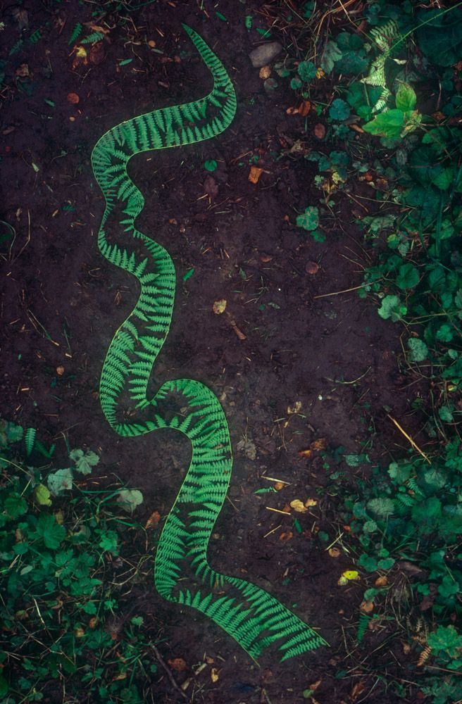 Bracken :: Andy Goldsworthy