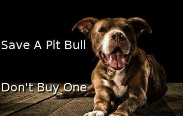 Save a Pit Bull.