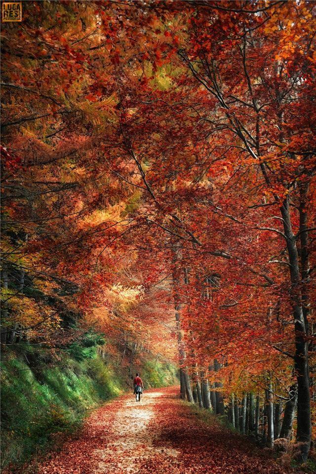 Selva de Irati (Navarra-España) https://www.facebook.com/LugaresParaPerderse/photos/ms.757558824266507.757558814266508.757558864266503.bps.a.482140055141720/757558864266503/?type=1