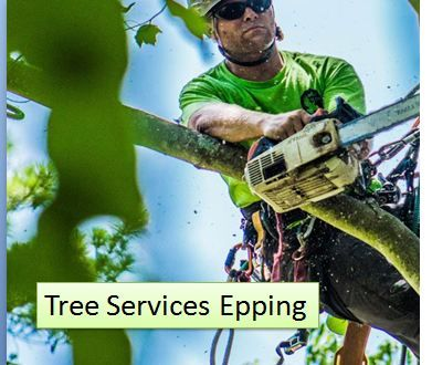All Shores Tree Services is a traditional family-owned business, which offers professional Tree Removal Services in Sydney and North Ryde.