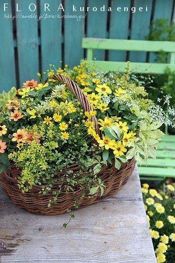 寄せ植え フローラのガーデニング・園芸作業日記