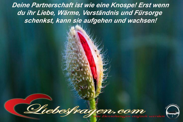 Deine Partnerschaft ist wie eine Knospe! Erst wenn du ihr Liebe, Wärme, Verständnis und Fürsorge schenkst, kann sie aufgehen und wachsen! http://liebesfragen.com/warum-dein-freund-dich-nie-verstehen-wird-1