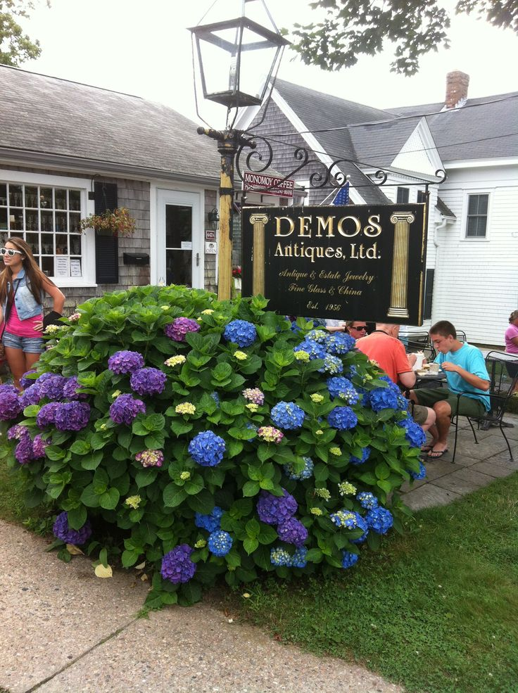 94 best Chatham-Original Photos by Chatham Ivy images on Pinterest ...