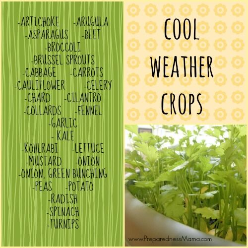 Get to Know Your Cold Weather Crops - PreparednessMama