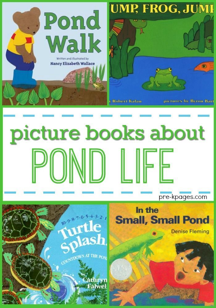 Books for Preschool About Pond Life. A list of the best picture books to introduce your preschool, pre-k, or kindergarten kids to pond life for a pond habitat theme. - Pre-K Pages