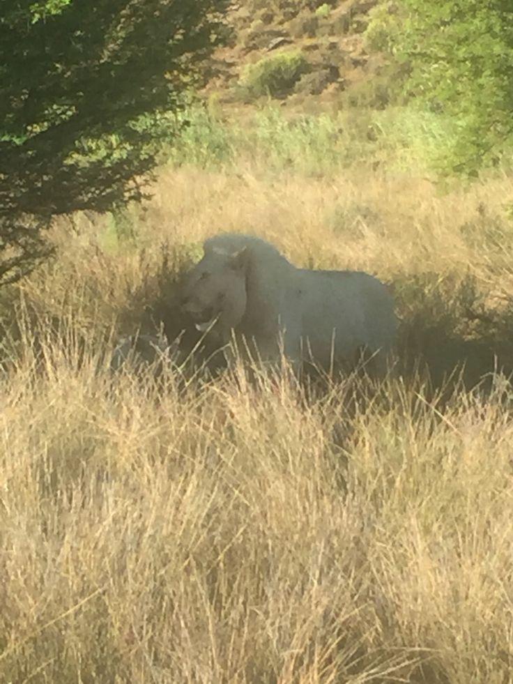 Sanbona Safari ❤️