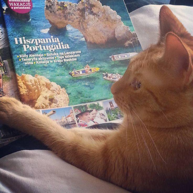Dokąd oni pojechali? #wywczs #piętas # kot #cat #rudykot #smutny #podróże…