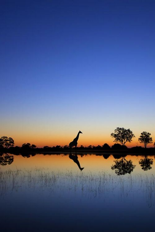 An epic sunrise deep in the Okavango Delta in Botswana.