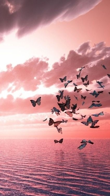 ♥Pink butterflies.