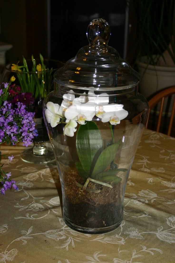 Enclosed terrarium idea for orchids - 94 Best T E R R A R I U M Images On Pinterest Terrarium Ideas