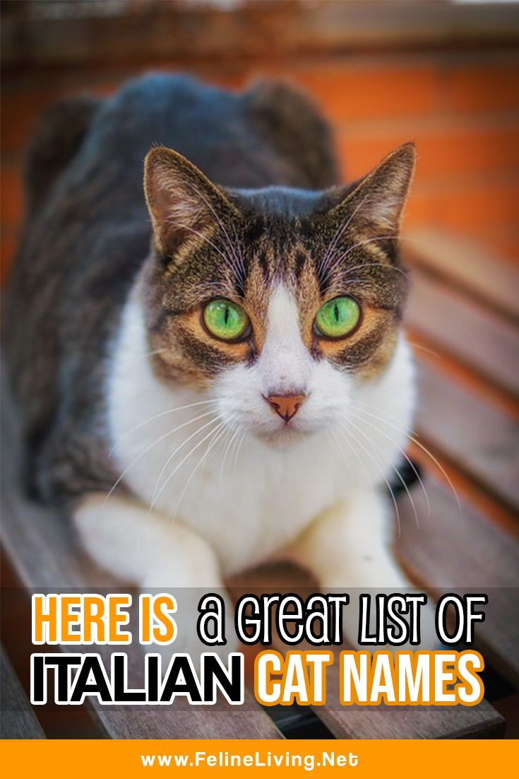 Felineliving Net Girl Cat Names Cat Names Cats