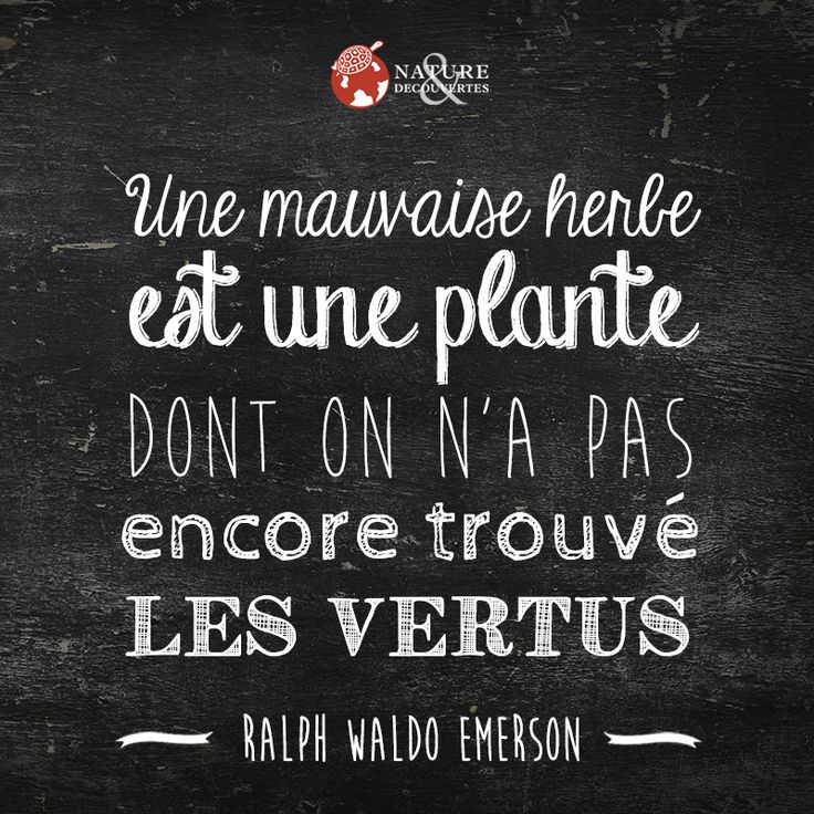 Une mauvaise herbe est une plante dont on n'a pas encore trouvé les vertus.   Ralph Waldo Emerson