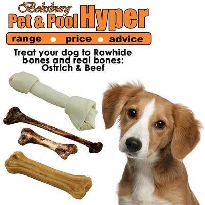 Your dog chewing everything in the house? With our great range of bones, we have Rawhide and real beef or ostrich bones available from Pet Pet & Pool Hyper Boksburg. #bones #dogtreats