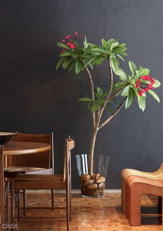 """Galho imponente - Nem só de flores de corte se faz um arranjo. Nesta proposta de Fernanda Cunha, da Bambu Flores, um galho de jasmim-manga (Plumeria rubra), árvore do México, se equilibra entre as pedras encaixadas no vaso de vidro. """"A boa surpresa é descobrir que o caule cria raiz facilmente"""", conta Fernanda. Como cuidado, basta manter 20 cm de água no fundo do recipiente."""