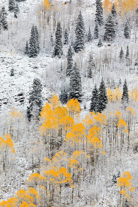 amazing nature white and yellow forest trees