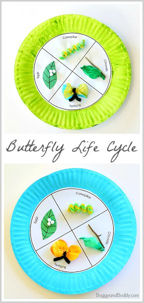 Butterfly Life Cycle Craft (with FREE Printable Template)