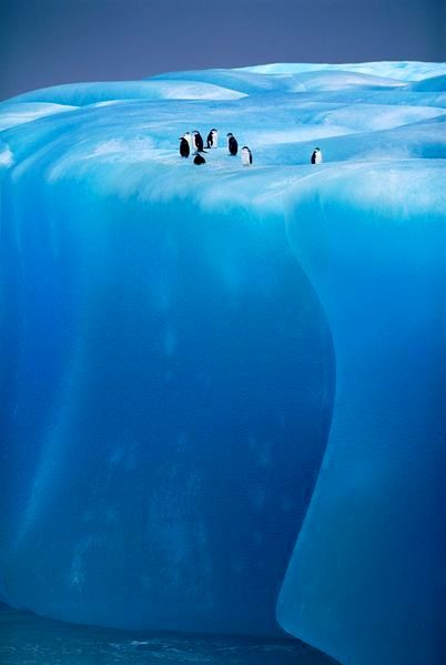 This is so amazing! See the penguins? :D
