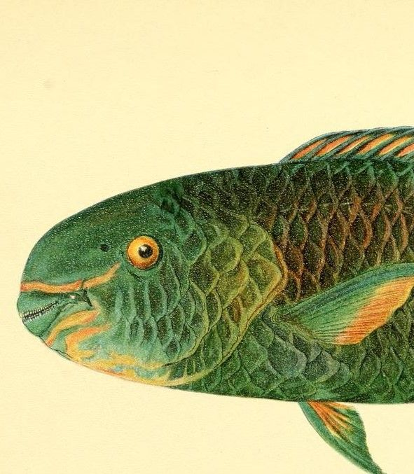 1439 best Under the Sea images on Pinterest | Fish, Lizards and Pisces