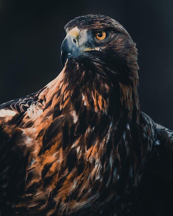 крутые картинки с орлами демонстрируют